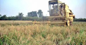 Agriculture Problems and Importance in Pakistan