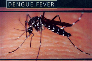 Dengue Fever Prevention, Causes, Symptoms, Treatment and Signs