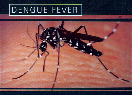 causes and treatments of dengue fever Dengue is a mosquito borne infection of aedes family it is caused by aedes ageypti the side effects and symptoms of dengue fever for the most part start following three to fourteen days of.