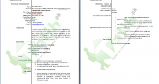 Professional CV Format In MS Word Doc Free Download PDF