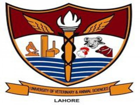 UVAS Entry Test Result 2016 Merit List Of University Of Veterinary And Animal Sciences