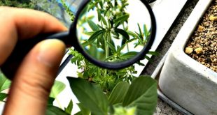 Botany In Pakistan Subjects, Jobs, Courses, Requirements