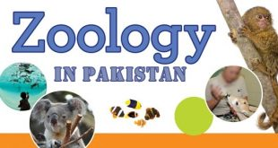 Zoology Scope In Pakistan, Jobs and Career, Salary, Offering Universities